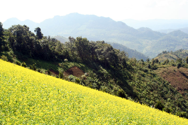 Kalaw Sesame fields